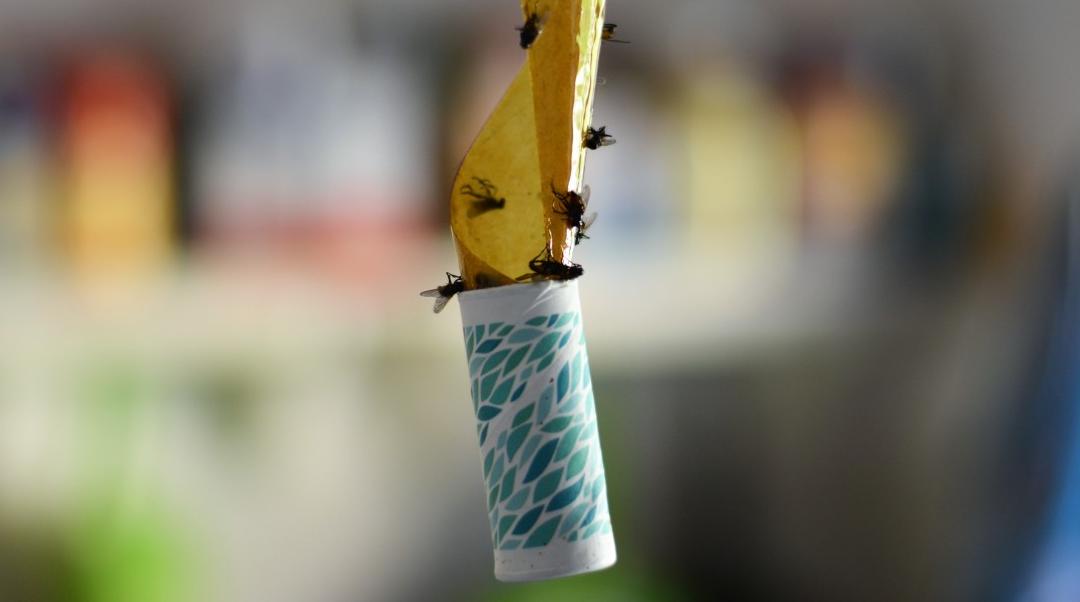 La négociation d'affaires : on n'attrape pas les mouches avec du vinaigre